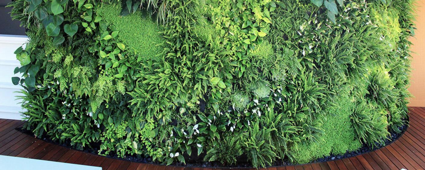 murs verds